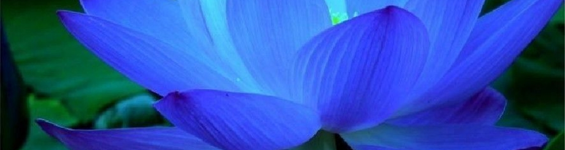 bluelotus1000x1000